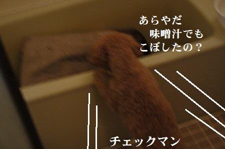 P1310810(1).jpg