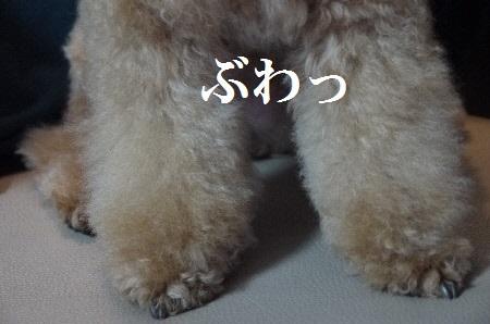 P1310850(1).jpg