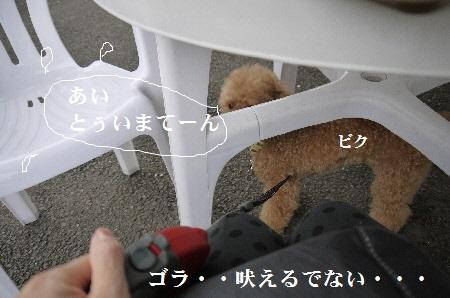 P1310918(1).jpg