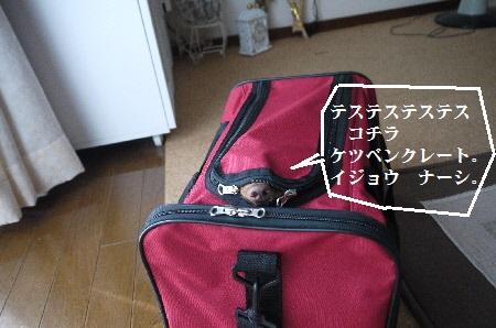 P1320149(1).jpg