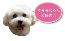haku_kokuhaku.jpg