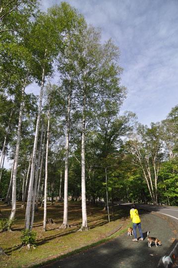 310岩尾内湖散歩