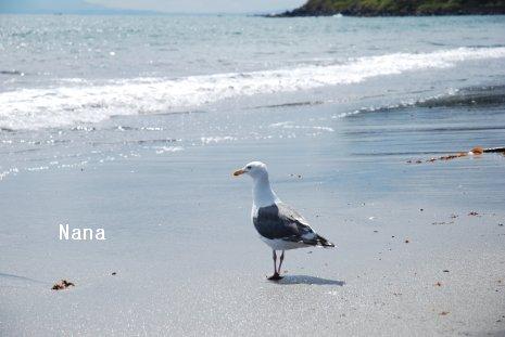 beach1-6.jpg