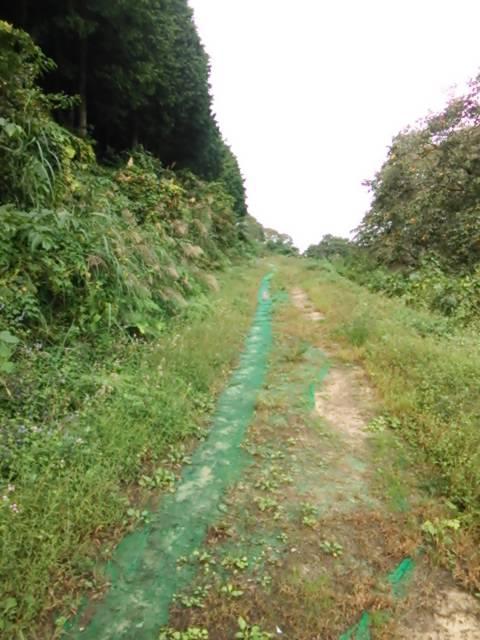 神鍋林道1