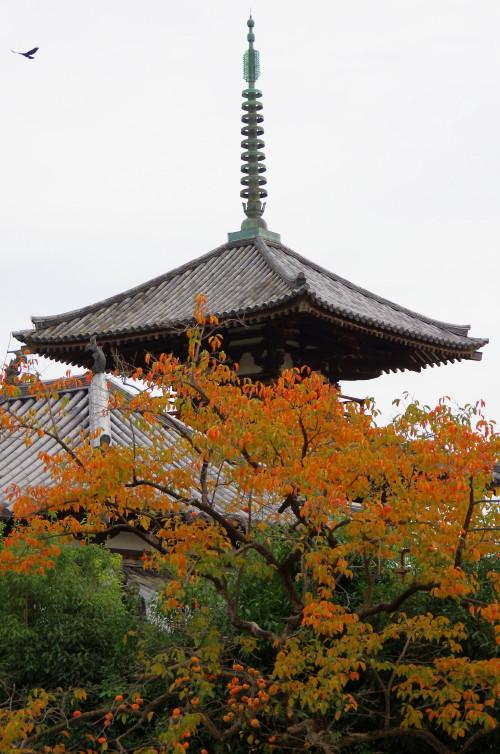 法起寺 柿