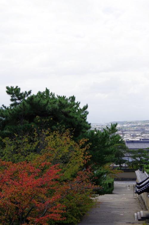 法隆寺 桜もみじ3
