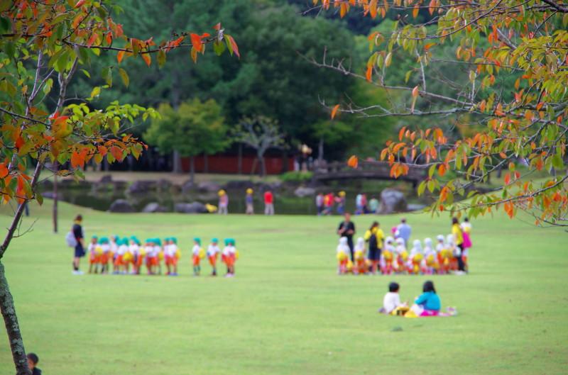IMGP1209奈良公園 桜紅葉