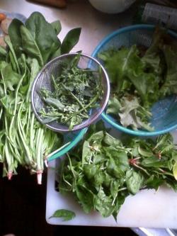 4-3収穫
