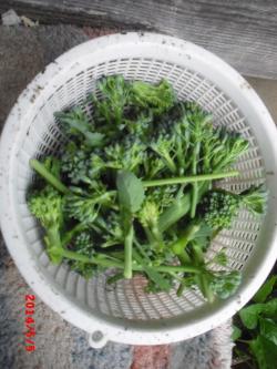 5-5収穫