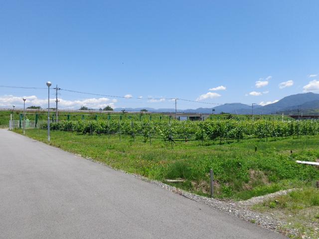 20140615農場2