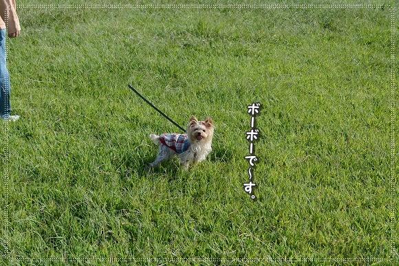 DSC_0016_20140928202434d3e.jpg