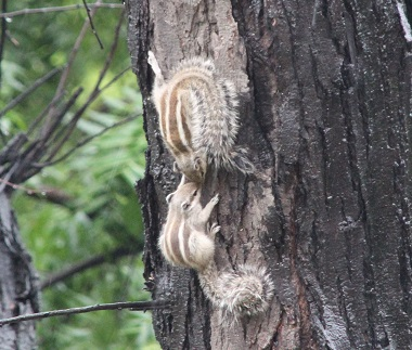 squirrels-rainyday2.jpg