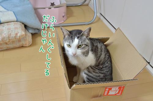 DSC_0533_2.jpg