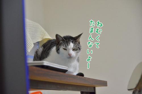 DSC_1558_2.jpg