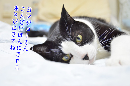 DSC_1741_2.jpg