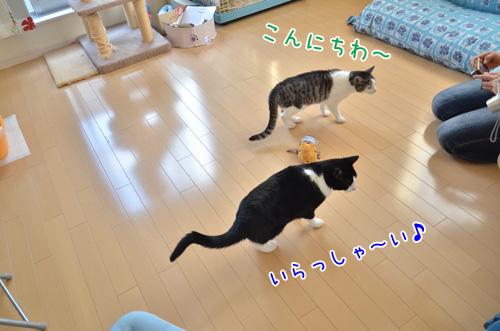 DSC_2010_2.jpg