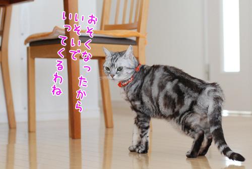 DSC_3081_2.jpg