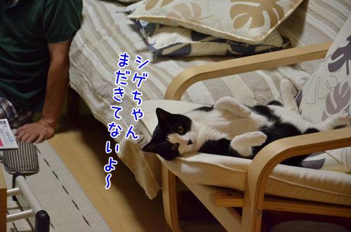 $猫道上等★