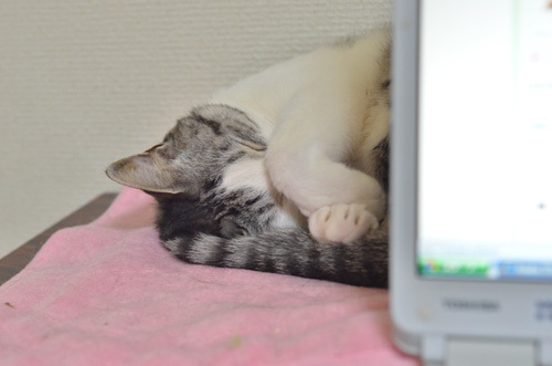 猫道上等★