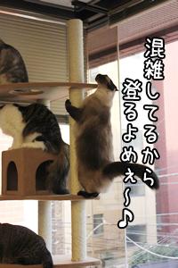 あぽろ20140821-01