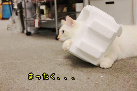 大福20140901-05