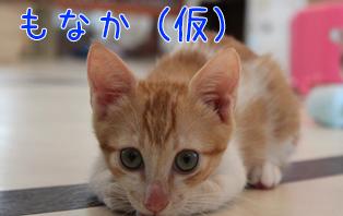 もなか(仮)20140903