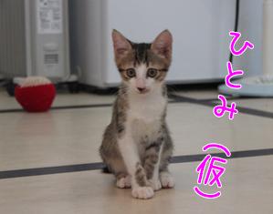ひとみ(仮)20140903