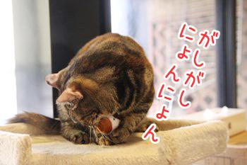 いちご20140906-03