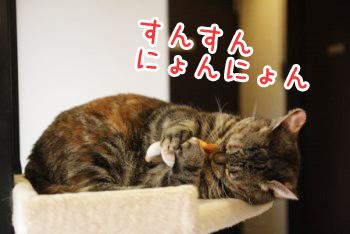 いちご20140906-06