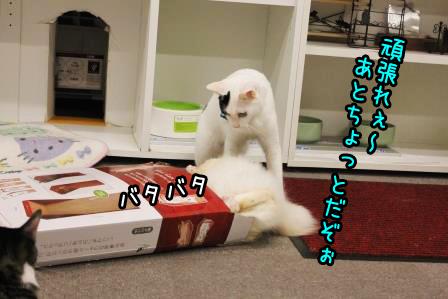 大福20140923-05