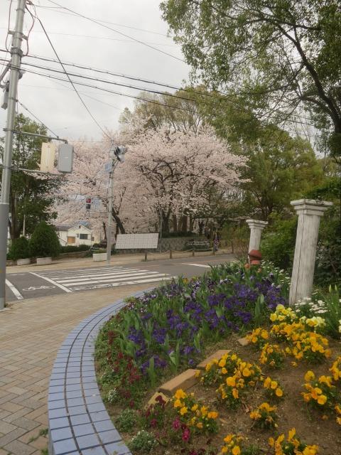 桜の下の花壇