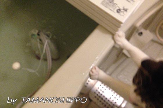 お風呂を覗く猫