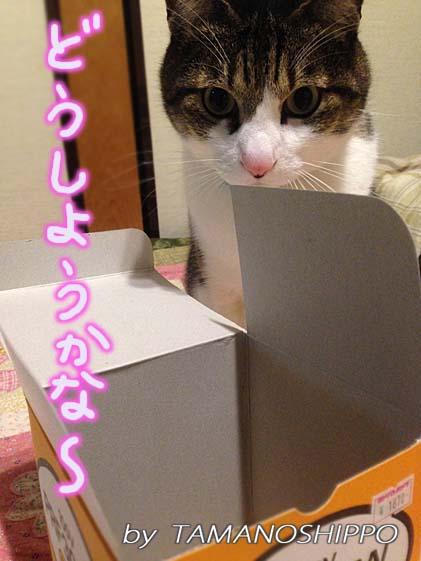 小さな箱に入ろうか悩んでいる猫