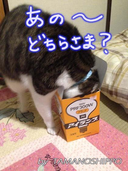 箱に頭を突っ込む猫