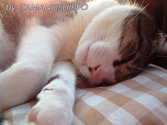 気持ち良さそうに日光浴をして熟睡中の猫