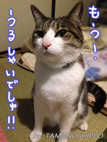文句を言う猫(うるさいでしゅ)