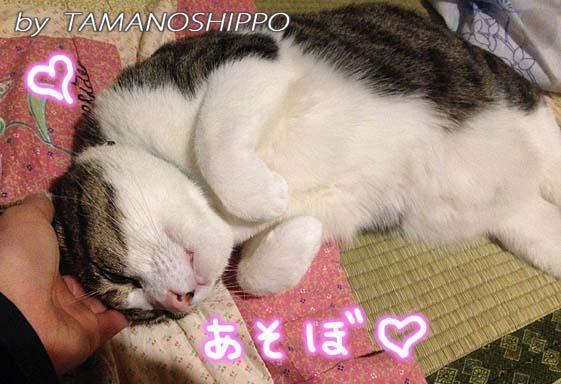甘えてくる猫(手にスリスリ)