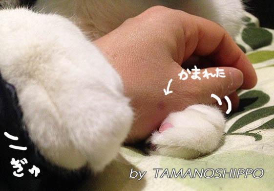ぎゅーっと手を掴む猫