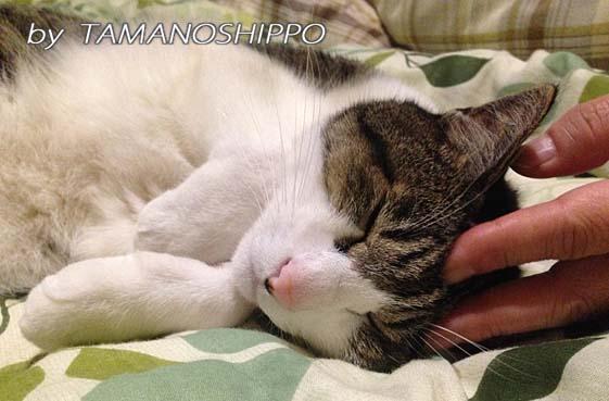 スリスリしながら寝てる猫