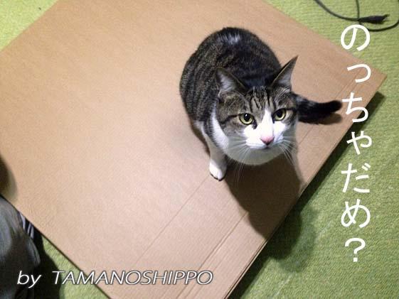 組み立て前の家具に乗る猫(イケヤ)