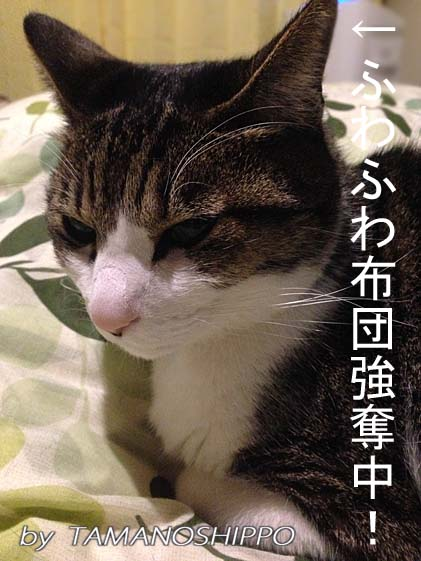 ブスーとしてる猫