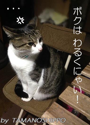 イカ耳猫(怒られて逆切れする猫)