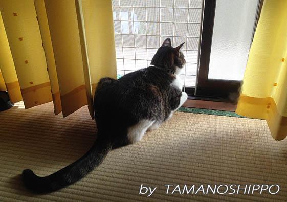 お外を見てたたずんでいる猫(窓辺)