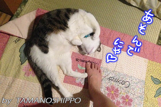 お腹を見せて甘えてくる猫