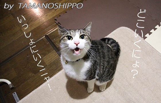 訴える猫(心配する猫)