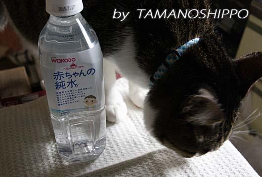 お水(避難用)といたずら猫