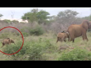 ゾウの赤ちゃん 「お母しゃんまってぇ~」