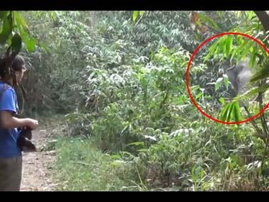 野生のゾウが森の中にいる → 近くで観光客がじっと見ていた → 結果
