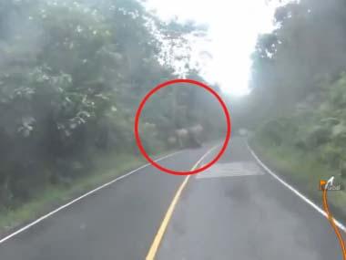 バイクで走っていたら 「ゾウの親子」が道を歩いていた → 母ゾウがこっちに気づいた → すると・・・
