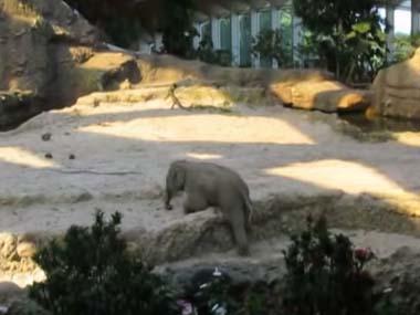 ゾウの赤ちゃんが 必死に段差を登ろうとする → しかし滑って倒れた → すると・・・